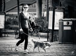 promener chien