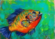baby-blue-bluegill-study-mike-savlen
