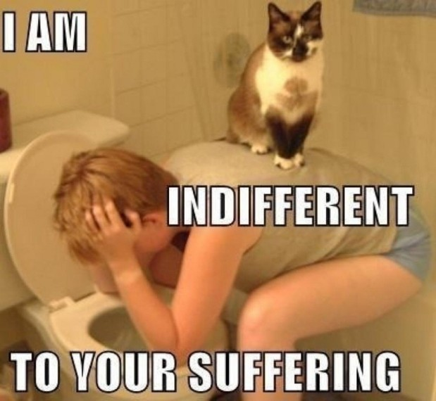 20-hilarious-memes-and-photos-about-the-hazards-of-cat-ownership-13