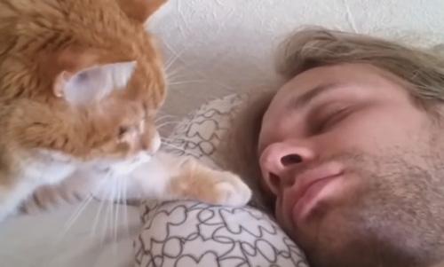 cat-alarm1