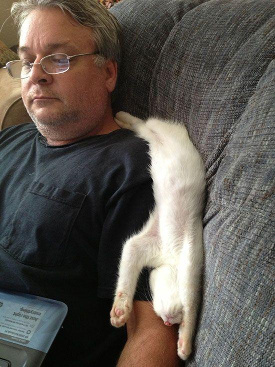 cat-owner-16